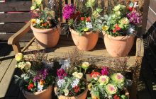 花のある暮らし お正月の寄せ植え教室